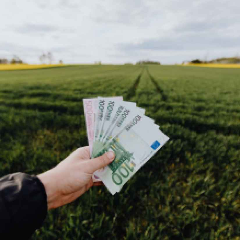 crop farmer showing money in green summer field in countryside