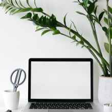 laptop on desk near lush houseplant